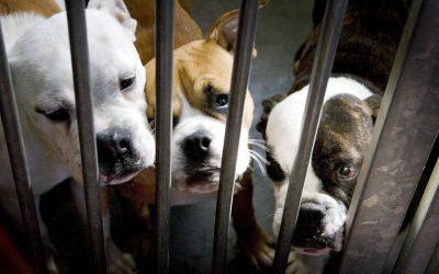 Ongeneeslijke hondenziekte gevonden bij Nederlandse fokker